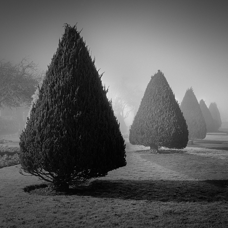 Conifers, Wharfe Meadows Park Otley - Otley and Ilkley at Night