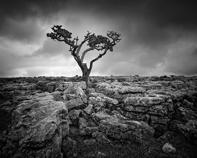 Tree and Limestone - Landscapes