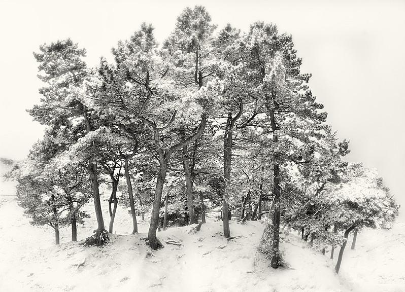 Fine Art Photograph of Ferns