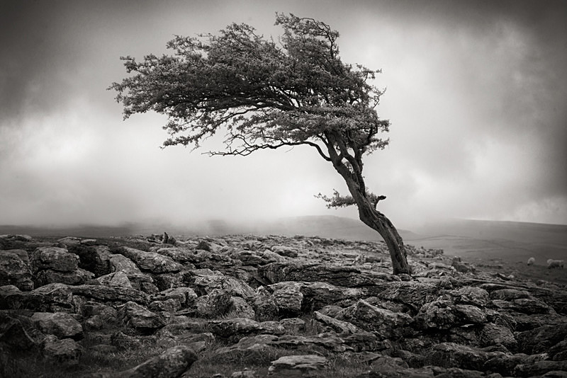 Tension - Landscapes