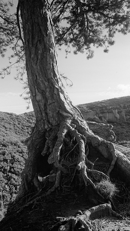 Dry Roots - Landscapes