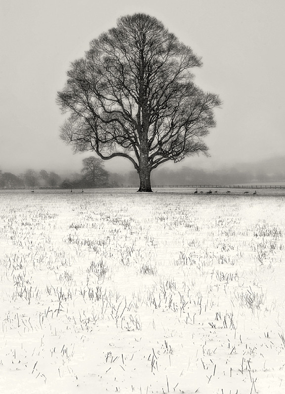 Winter Scene Black and White Photography Ilkley