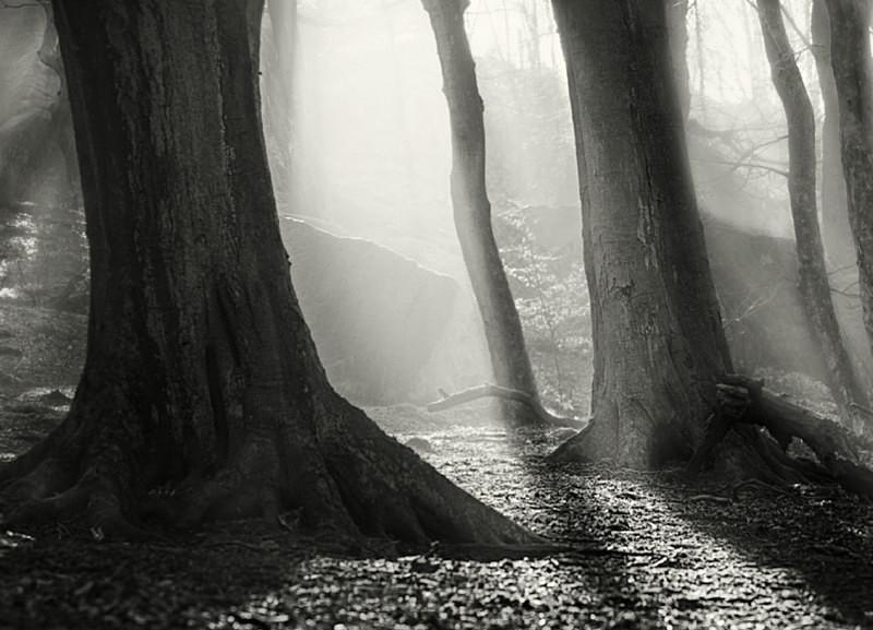Light and Mist