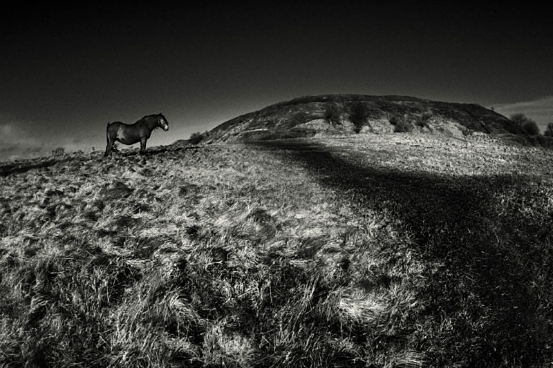 Pony on the Moors