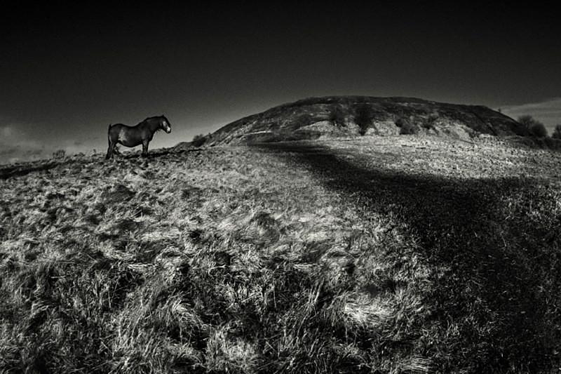 Pony on the Moors