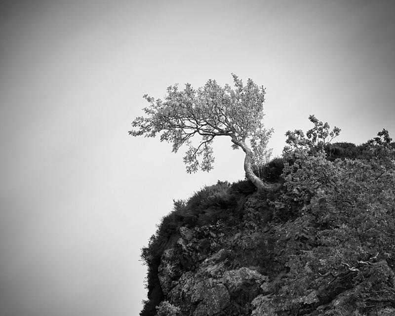 High Tree - Landscapes