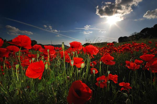 Blossom Light - Tuscany