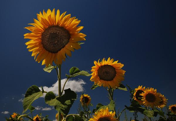 Sun Aligned - Tuscany