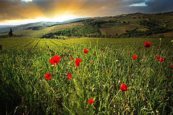 Tuscanylight - Tuscany