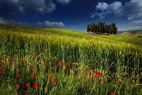 Tuscanyscape - Tuscany