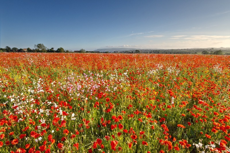 z2224 Poppy Meadow, Sandown - Sandown, Shanklin, Luccombe and Wroxall