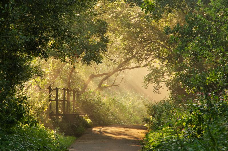 z2109 Summer Mist, Alverstone - The Inner Island inc Newport & Godshill