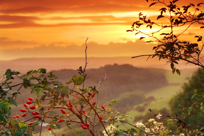 694 Rose hips at Sunset, Knighton - The Inner Island inc Newport & Godshill