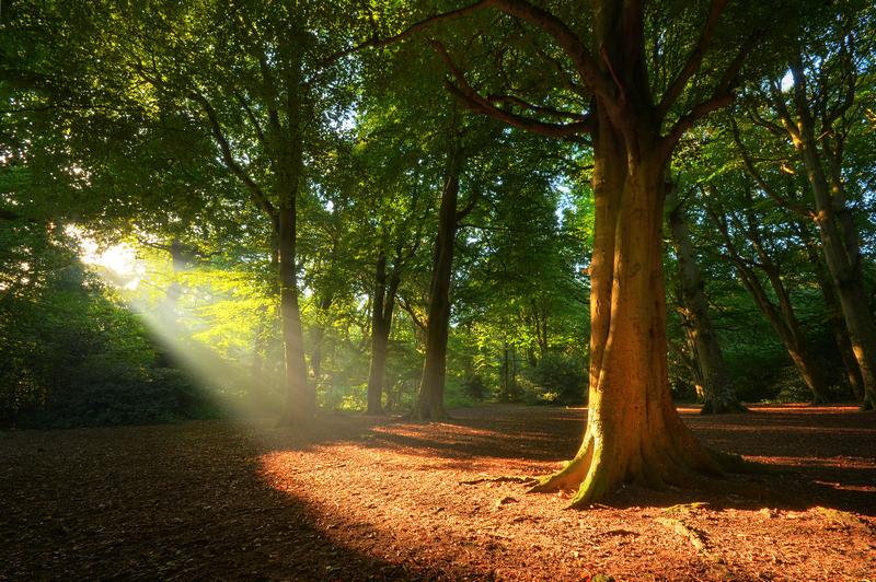 z2208 Tree of Light, Borthwood Copse - Sandown, Shanklin, Luccombe and Wroxall
