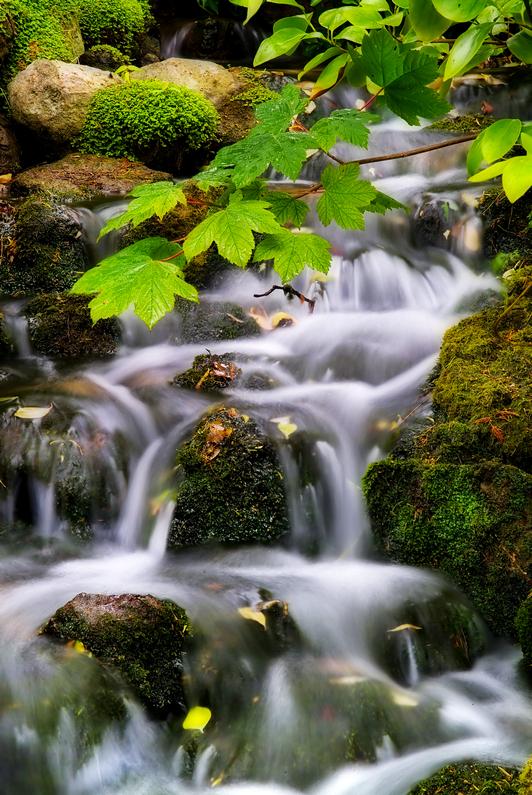 984 Bonchurch stream - Ventnor to St Catherine's inc Bonchurch & Whitwell