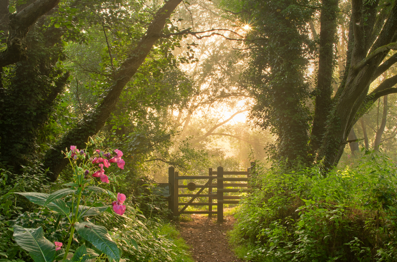 z2105 Misty Summer Morning, Alverstone - The Inner Island inc Newport & Godshill