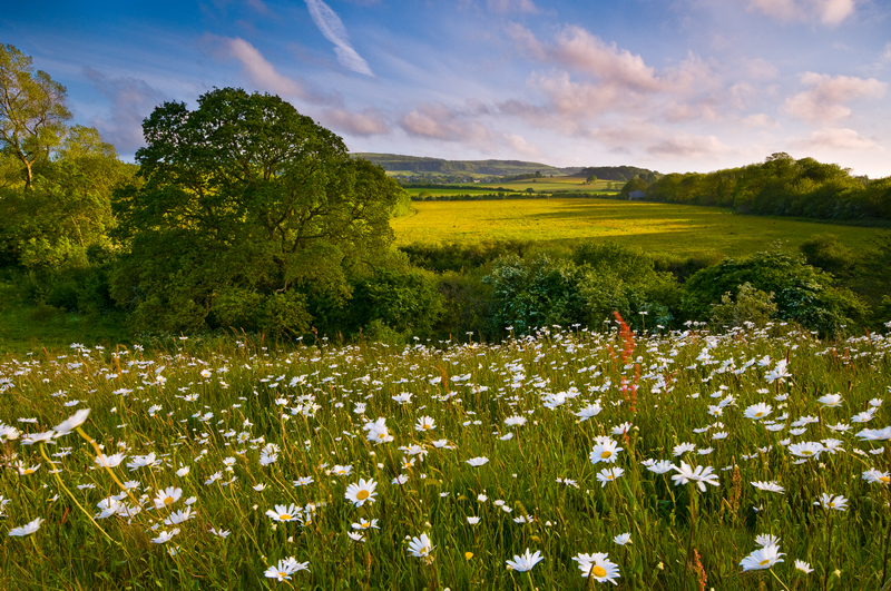 z1616 Summer Meadow, Shanklin - Sandown, Shanklin, Luccombe and Wroxall