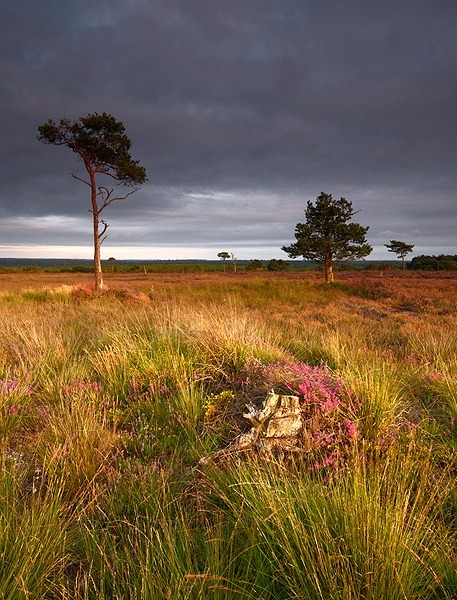 HOLT HEATH REMAINS - New Additions