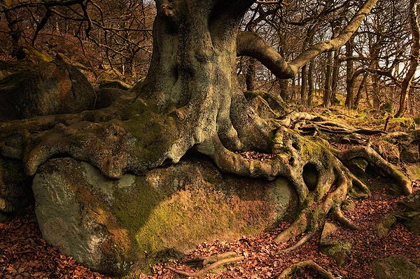 Beeched Roots - Landscapes
