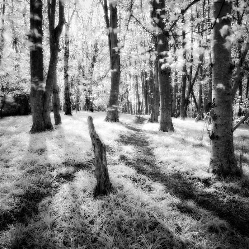 In the Woods - Landscape
