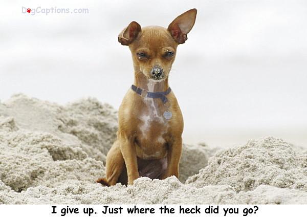 - Chihuahua
