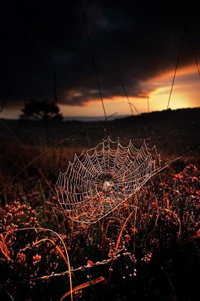 Morning Sun - Ashdown Forest