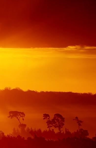 Morning Mist - Ashdown Forest
