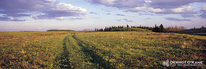 Prairie Trail - Panoramic Horizontal Images