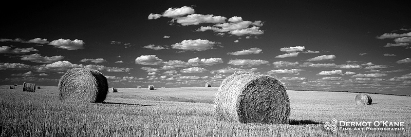 Harvest - Panoramic Horizontal Images