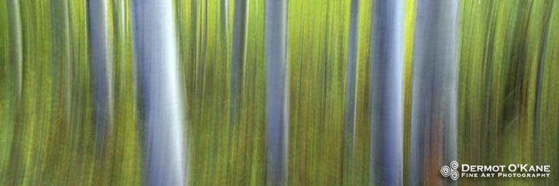 Aspen Impressions - Panoramic Horizontal Images