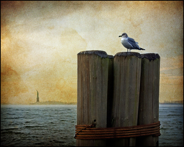Gull and Statue of Liberty - NY Harbour - Picture Gallery