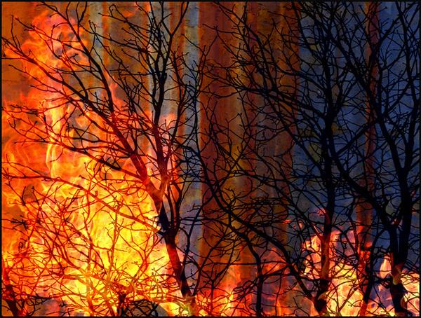 8 Burning Bush - Meditation Project