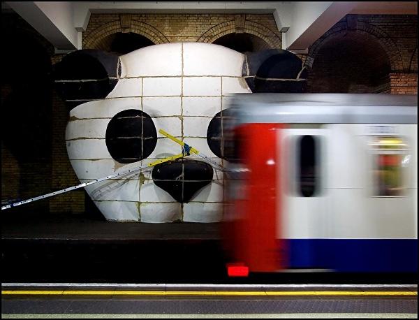 Panda - ARPS Images
