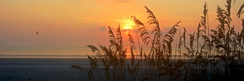 Sunrise Seaoats Panorama - Panoramas