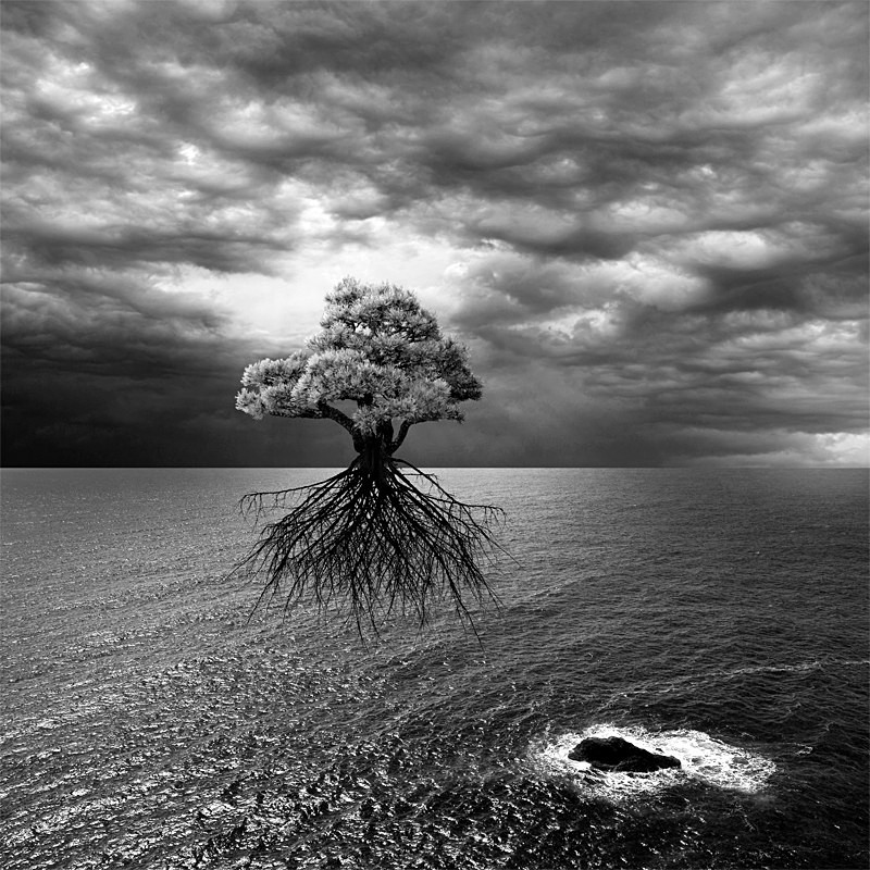 Searching for Land - Surrealism - Black & White