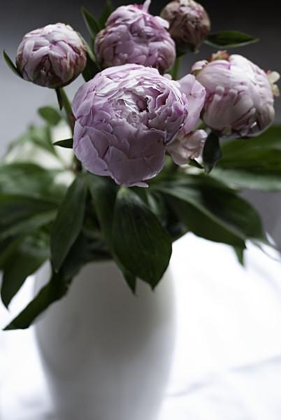 - Flowers
