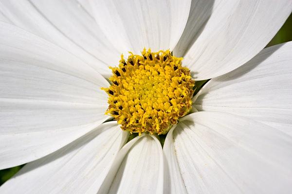 _MG_3759_edited-1 - Flower Studies