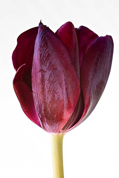 _MG_4515_edited-1 - Flower Studies