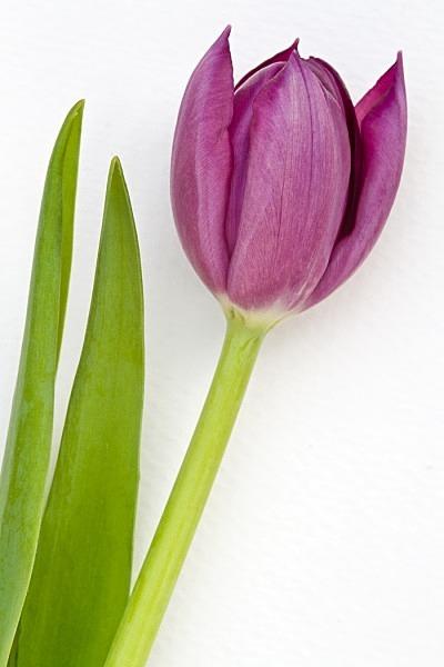 _MG_1968_edited-1 - Flower Studies