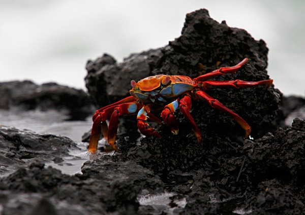 - Ecuador: Galapagos Islands