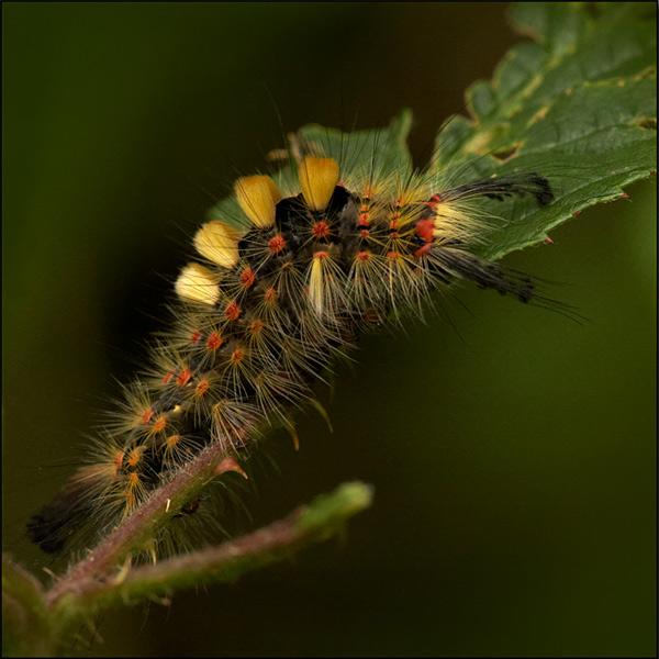 - Beautiful Bugs