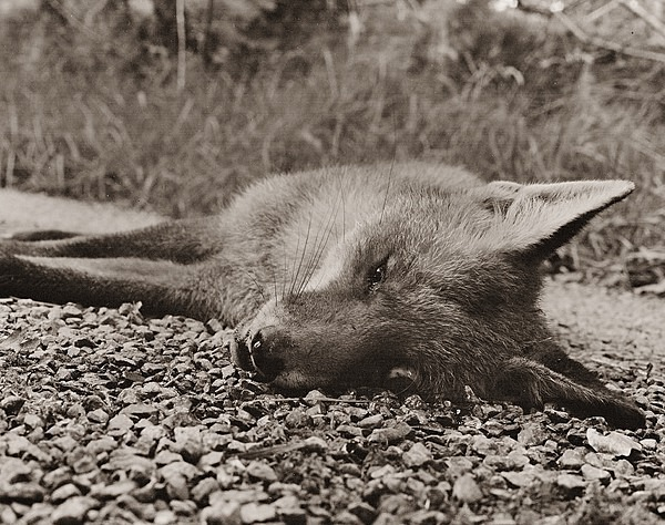 FOX, Ysbwty Ystwyth 1998 - MISCELLANEOUS