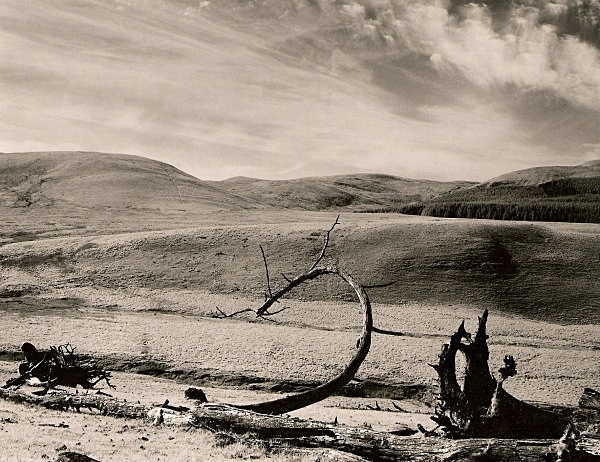 DEAD TREE, Cefn Coch, Cwmystwyth, Ceredigion 1993 - THE WELSH LANDSCAPE