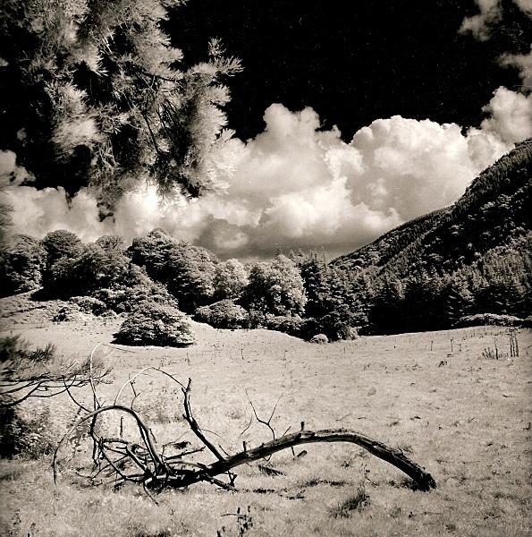 HAFOD FIELDS, Pontrhydygroes, Ceredigion 1991 - THE WELSH LANDSCAPE