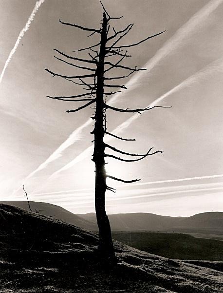 DEAD TREE, Cefn Coch, Cwmystwyth, Ceredigion 2009 - THE WELSH LANDSCAPE