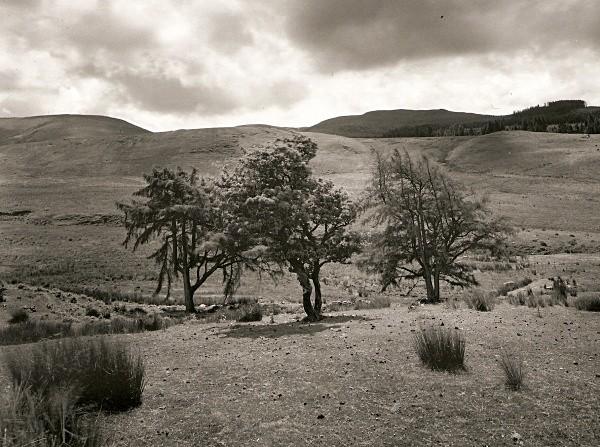 FRUIT TREES, Cefn Coch, Cwmystwyth, Ceredigion 2010 - THE WELSH LANDSCAPE