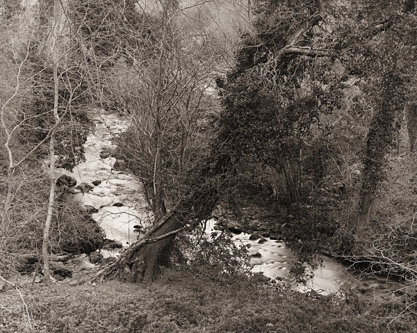 CWM PERIS WOOD, Llanon, Ceredigion 2015 - THE WELSH LANDSCAPE