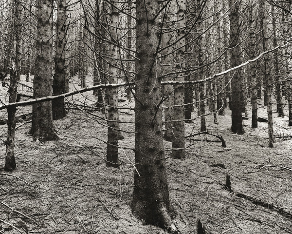 FORESTRY AT HAFOD, Cwmystwyth, Ceredigion 2001 - THE WELSH LANDSCAPE