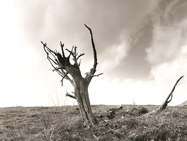 DEAD TREE, Cefn Coch, Cwmystwyth, Ceredigion 2010 - THE WELSH LANDSCAPE