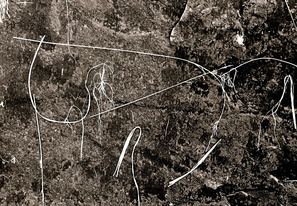 GRASS ON ROCK, Cwm Elan, Powys 2003 - THE WELSH LANDSCAPE